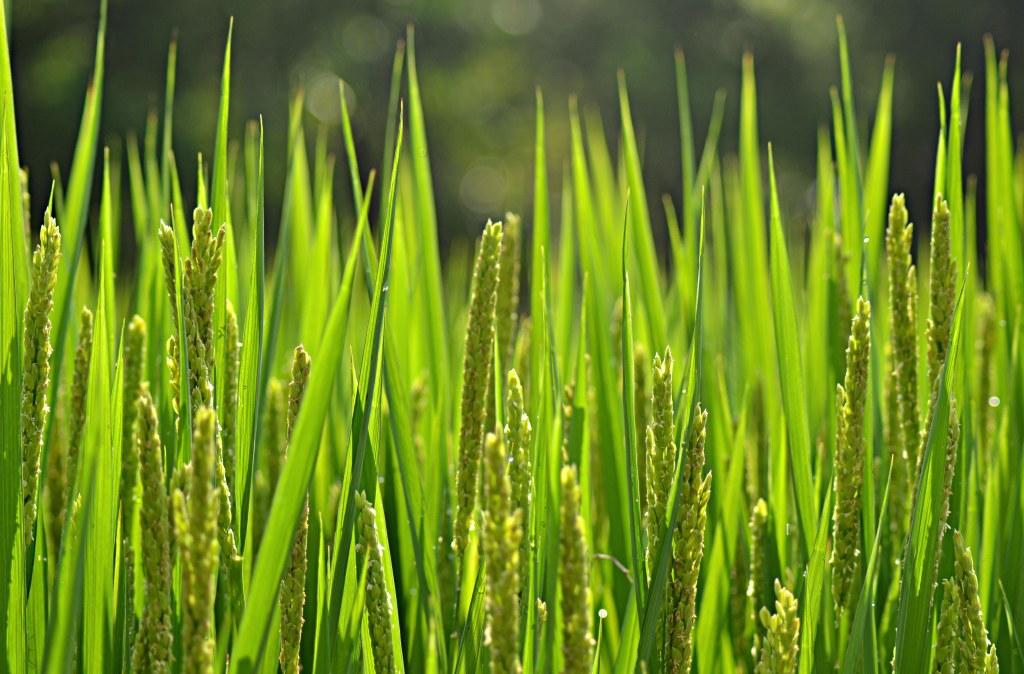 Grünes China